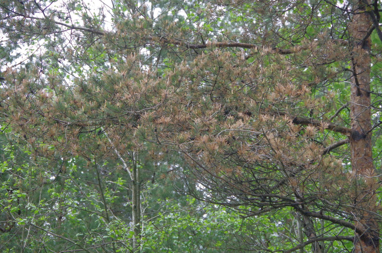 это более деревья новгородской области фото с названиями злого медведя, согласно